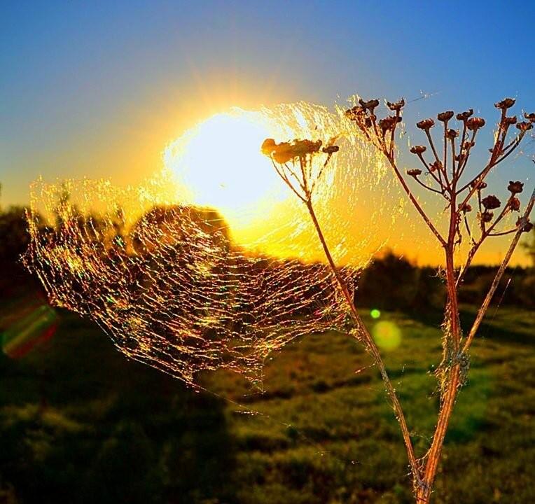 Паутинка на солнце
